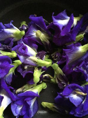 チョウマメの花